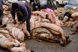 Man inspecting collection of sheep hides off a parking lot in Fes Medina Morocco days after Eid al Adha