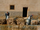 Pair of tannery workers painting sheep hides with blue chromium and stacking pelts in Fes Morocco