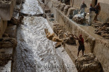 Tannery workers throwing and washing sheep pelts and painting sheep skins with blue chrome at the Fes river Morocco