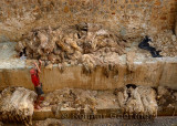 Tannery worker throwing pelts after washing fresh sheep skins in the Fes river after Eid al Adha Morocco