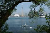Toronto and Island Swans.jpg