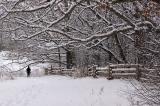 67 Winter Walk under trees.jpg