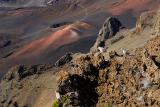 82 Chukars at Haleakala.jpg