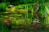 86 Dawn Duck dip 2.jpg