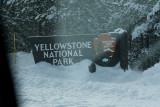 Yellowstone Park Snow Coach Tour 09