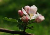 blossom5115094.jpg