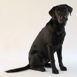 guide_dog_puppys_