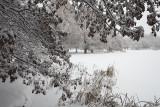 Jericho in winter