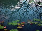 Chinese garden Pond