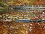Van Dusen Pond 2