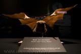 Star Wars The Exhibition (73).jpg