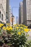 City Lites - Chicago