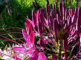 Flower Find ~ September 11th