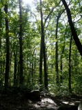 In The Woods ~ September 21st