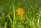 Leaf in grass