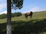 Valcea County