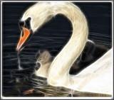 Swan 1 2.jpg