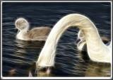 Swan 2  2.jpg