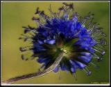Small-Flower-7 frac moti.jpg