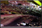 Waterdroplets-on-a-leaf frac moti.jpg