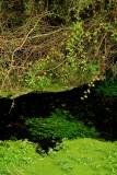 Rhine forest Krafft