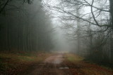 a veil of mist