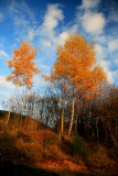 november blue sky