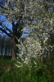 spring 2009