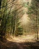 forêt de la Petite-Pierre.