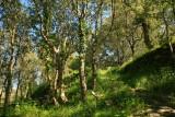corsica cape, forest.