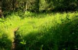 lush greenery in Corsica