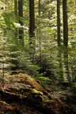 la fraicheur de la forêt