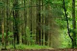une forêt, en Alsace.
