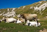 pastures