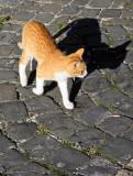 un gatto rosso