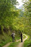 Pietracamela, forest
