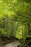 Pietracamela, forest # 2