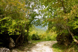 Pietracamela, the forest # 3