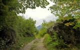 the forest of Pietracamela
