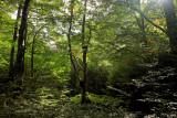 the forest of Pietracamela # 4