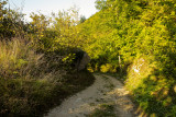 Pietracamela, forest # 7