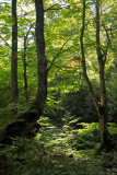 Pietracamela, forest # 8