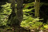 Pietracamela, the forest # 4