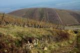 Katzenthal vineyard