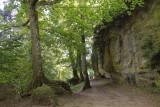 la forêt du mont Ste Odile
