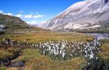 alps 1998