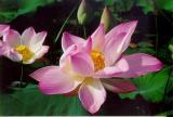 Gallery : Fleurs - Flowers