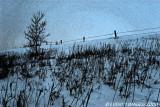 Field, Tree, Fence & Photo Shop