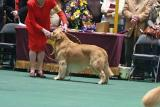 Dog Show day two007001.jpg