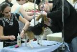 Dog Show day two027001.jpg